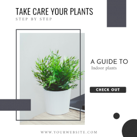 Online Editable Indoor Plants Blog Graphics Social Media Post