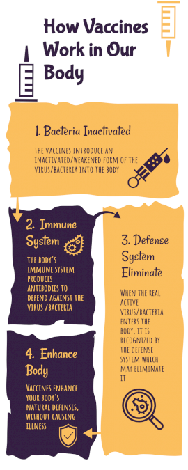 Online Editable How Do Vaccines Work in Our Body Process Infographic