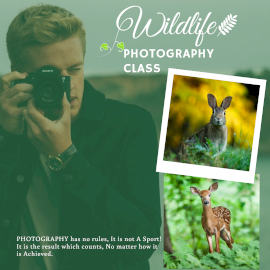 Wildlife Photography - Instagram Post