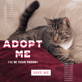 Online Editable Pet Adopt with Tail Movement Cinemagraph