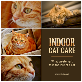 Online Editable Indoor Cat Care 4 Grid Photo Collage