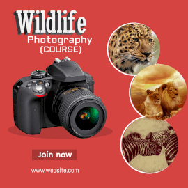 Online Editable Wildlife Photography Course Instagram Post