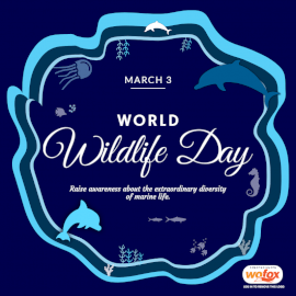 Online Editable World Wildlife Day March 3 Social Media Post