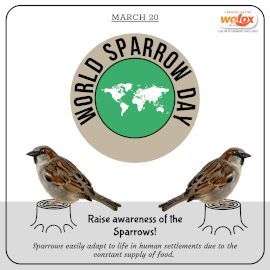 Online Editable World Sparrow Day March 20 Instagram Post