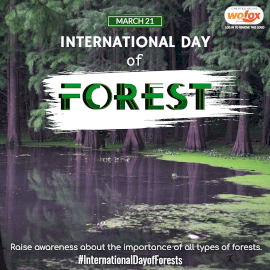 Online Editable International Day of Forests March 21 Instagram Post