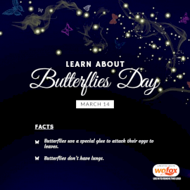 Online Editable Learn About Butterflies Day Fact March 14 Social Media Post