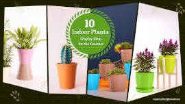 Online Editable Indoor Plant Ideas 4 Photo Collage