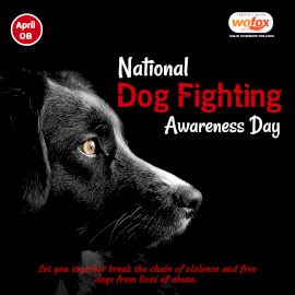 Online Editable National Dog Fighting Awareness Day April 8 Instagram Post