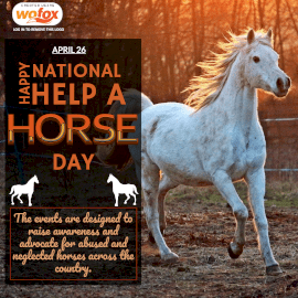 Online Editable National Help A Horse Day April 26 Instagram Post