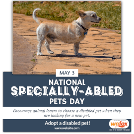 Online Editable National Specially-abled Pets Day May 3 Instagram Post