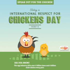 Online Editable International Respect for Chickens Day May 4 Social Media Post