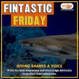 Online Editable Fintastic Friday: Giving Sharks Skates and Rays A Voice Instagram Post