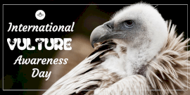 Online Editable International Vulture Awareness Day Twitter Post