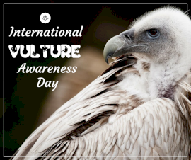 Online Editable International Vulture Awareness Day September 3 Facebook Post