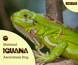 Online Editable Iguana Awareness Day September 10 Facebook Post
