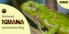 Online Editable National Iguana Awareness Day Twitter Post