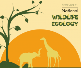 Online Editable National Wildlife Ecology Day September 11 Facebook Post