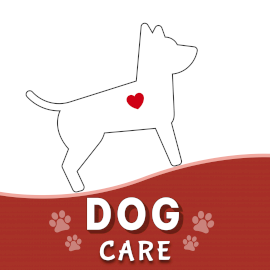 Dog care - Podcast Artwork